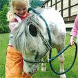 TOP Extra Paket- Reiten Schnuppertag für Kinder